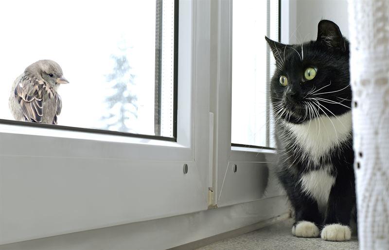 Karma sucha czy karma mokra, która najlepsza dla kota?
