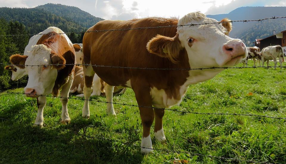 Elektryczne ogrodzenia pastwisk – zalety i wady