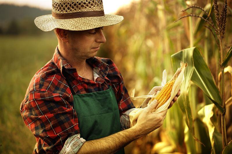 Wpływ środków ochrony roślin na witalność upraw